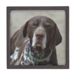 German Shorthaired Pointer Dog Gift Box