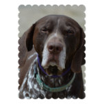 German Shorthaired Pointer Dog Invitation