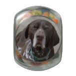 German Shorthaired Pointer Dog Jelly Belly Candy Jar
