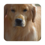 Golden Pup Drink Coaster