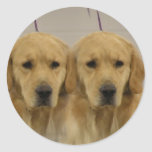 Golden Retriever Twins Sticker