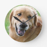 golden-retriever-31 round clock