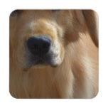 Gorgeous Golden Retriever Beverage Coaster