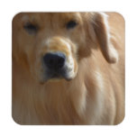 Gorgeous Golden Retriever Coaster