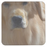 Gorgeous Golden Retriever Square Paper Coaster