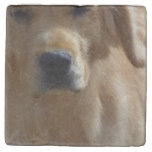 Gorgeous Golden Retriever Stone Coaster