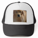 Gorgeous Golden Retriever Trucker Hat