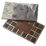 Gorgeous Weimaraner 45 Piece Box Of Chocolates
