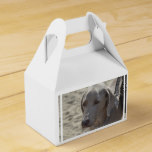 Gorgeous Weimaraner Favor Box