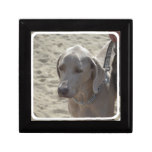 Gorgeous Weimaraner Jewelry Box