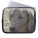 Gorgeous Weimaraner Laptop Sleeve