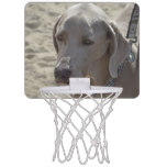 Gorgeous Weimaraner Mini Basketball Backboard