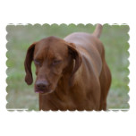 Great Vizsla Dog Card