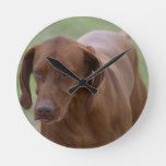 Great Vizsla Dog Round Clock