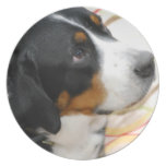 Greater Swiss Mountain Dog Plate