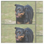 Guileless Rottweiler Fabric