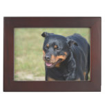 Guileless Rottweiler Keepsake Box