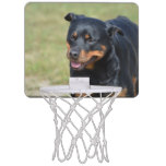 Guileless Rottweiler Mini Basketball Hoop