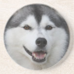 Husky Dog Coasters