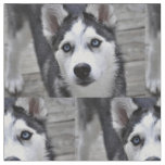 Husky Puppy Fabric