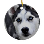 Husky Puppy Ornament