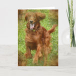 Irish Setter Dog Greeting Card