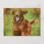 Irish Setter Dog Postcard