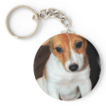Jack Russell Terrier Puppy Dog  Keychain