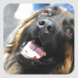 Leonberger  Stickers