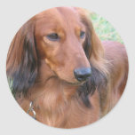 Longhaired Dachshund Sticker