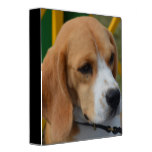 Lovable Beagle Binder