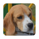 Lovable Beagle Coaster
