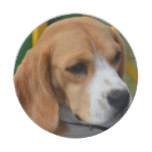 Lovable Beagle Paper Plate