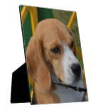 Lovable Beagle Plaque