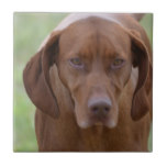 Lovable Vizsla Ceramic Tile