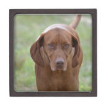 Lovable Vizsla Gift Box