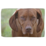 Lovable Vizsla Kitchen Towel