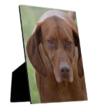 Lovable Vizsla Plaque