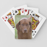 Lovable Vizsla Playing Cards