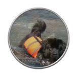 Newfoundland Dog Jelly Belly Candy Tin