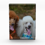 Pair of Poodles Acrylic Award