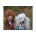 Pair of Poodles Canvas Print