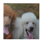 Pair of Poodles Ceramic Tile