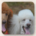Pair of Poodles Drink Coaster