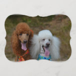 Pair of Poodles Invitation