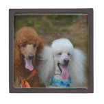 Pair of Poodles Jewelry Box