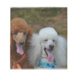 Pair of Poodles Notepad