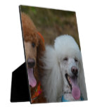 Pair of Poodles Plaque