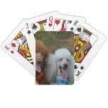 Pair of Poodles Playing Cards
