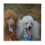Pair of Poodles Tile